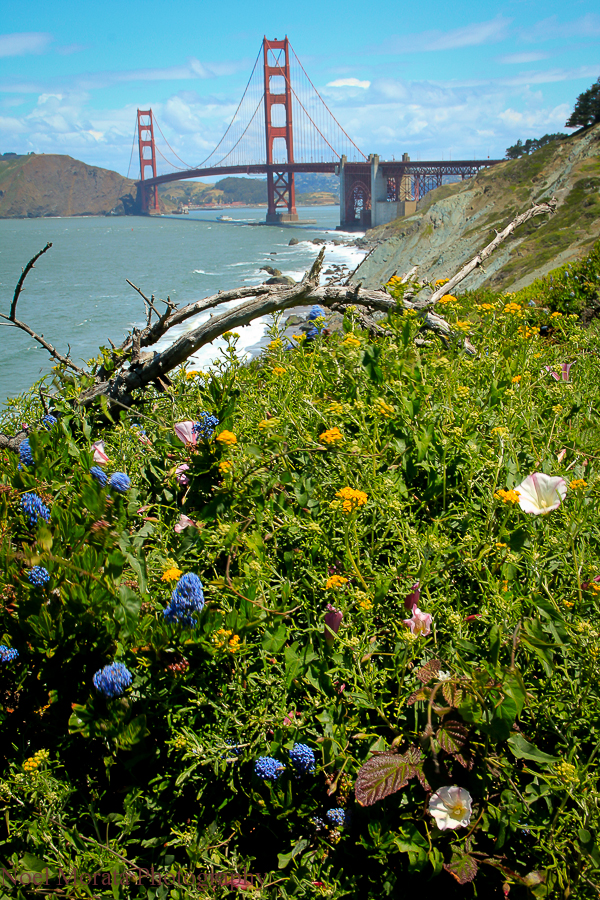 A view of the Golden Gate bridge at Lands end.