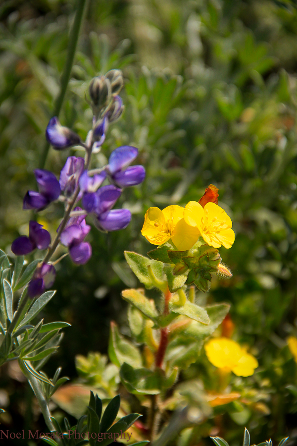 Pick up some wildflowers on your walk