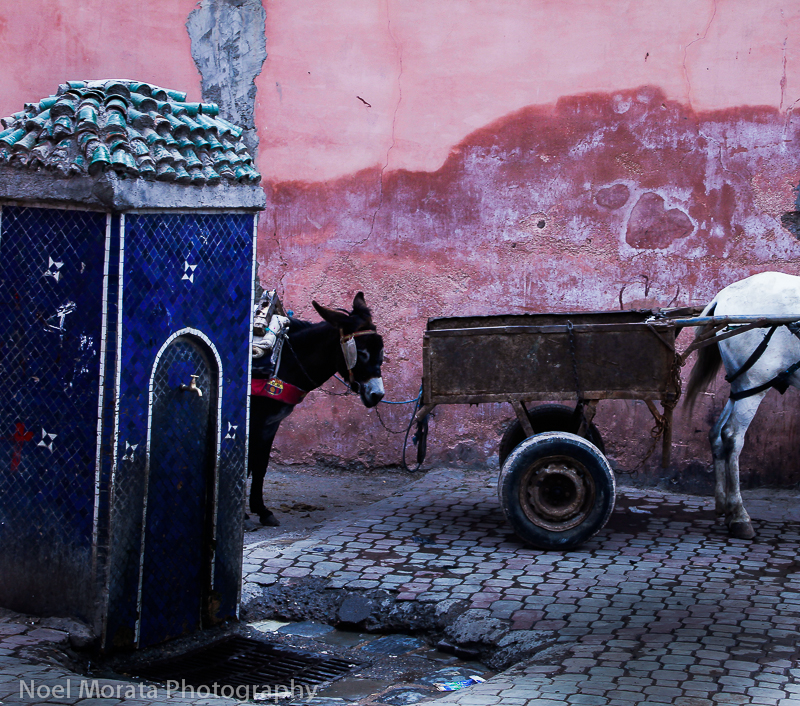 Donkeys and pink walls