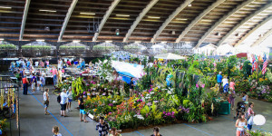 Stadium view of the HIlo Orchid show