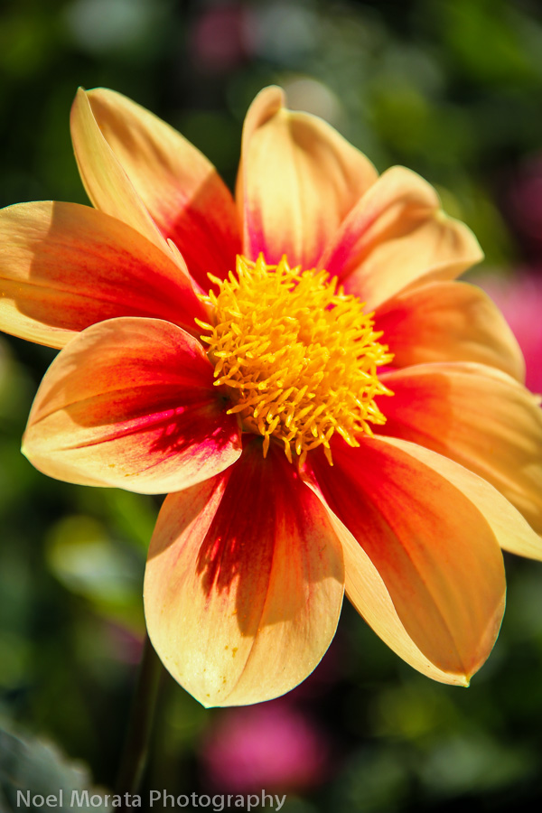 Travel Photo Discovery images of the dahlia dell