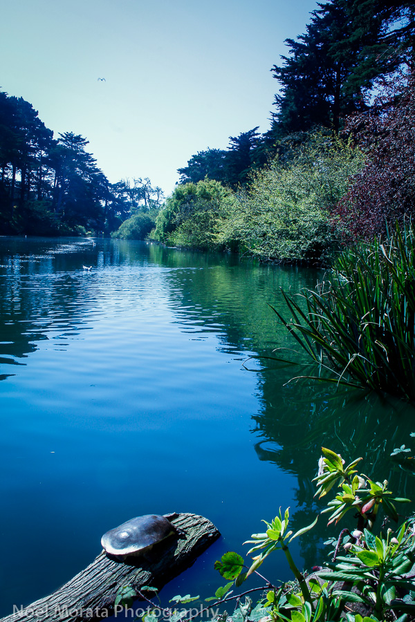 Stow lake in Golden Gate park