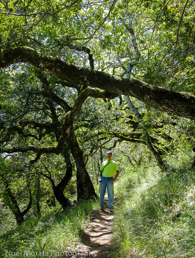 Me walking through the coastal oak forests