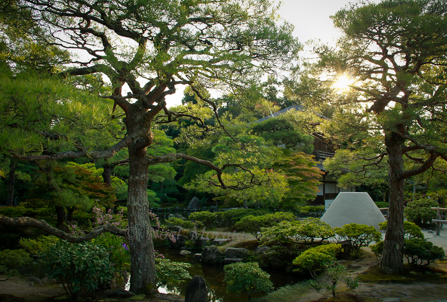 Beautiful gardens of Kyoto