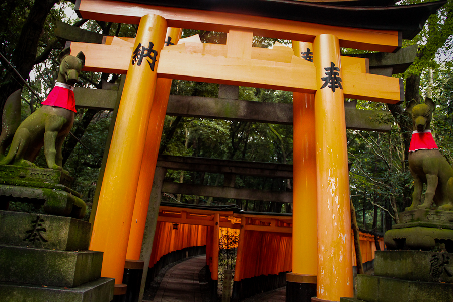 The many red torii gates leading up the hill of Inari