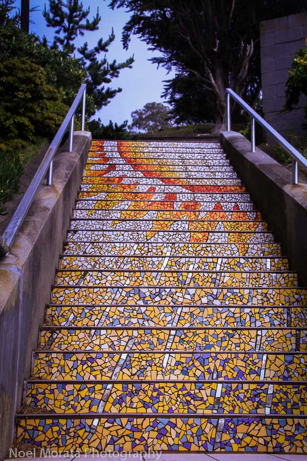 Evening to sunrise, California pinks and purples, California blooms, 16th Avenue stairs in San Francisco