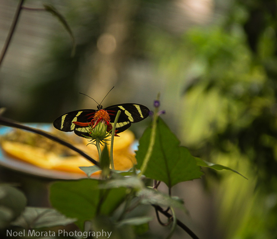 Butterflies in the rainforest exhibit