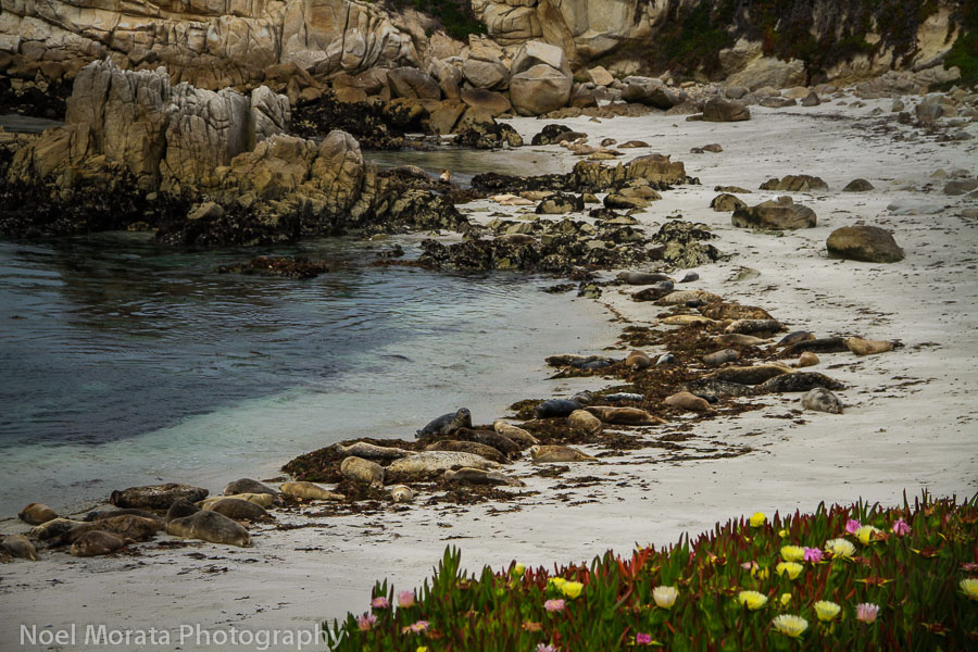 Monterey Bay  and Pacific Grove attractions