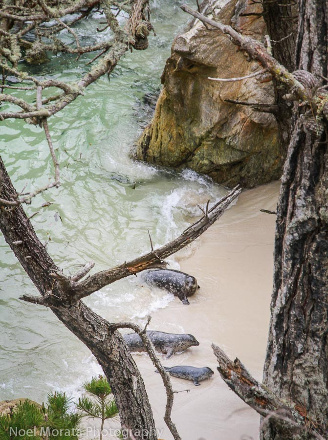 A quiet spot for sea lions at Point Lobos