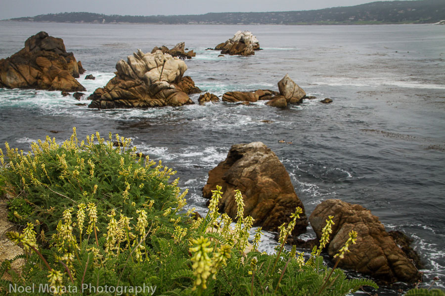Enjoying a day at Point Lobos State Reserve