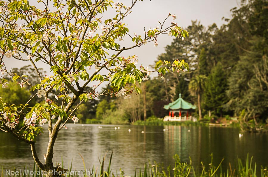 Stow Lake with pagoda in the background
