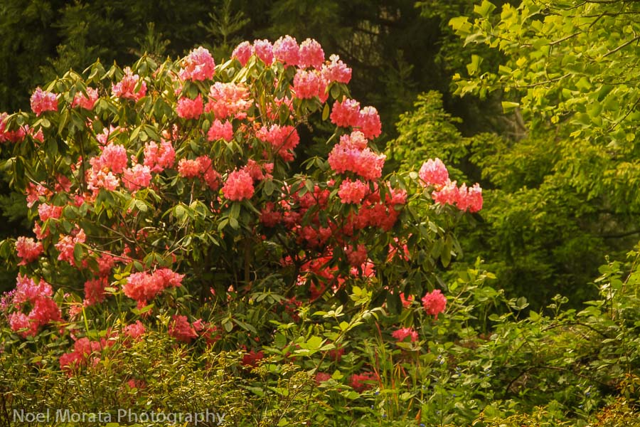 Golden Gate Park and the Rhododendron Dell