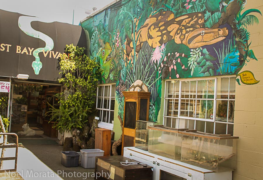 The East Bay Vivarium on 5th Street
