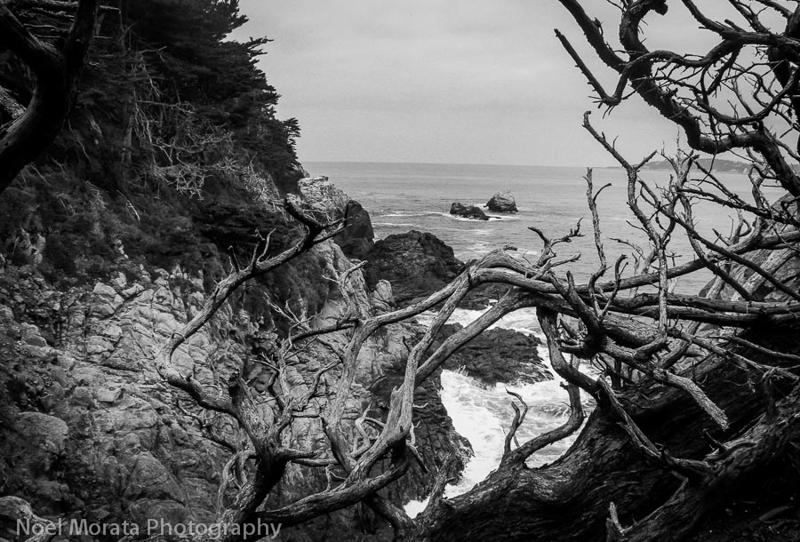 Point Lobos State Reserve in black and white