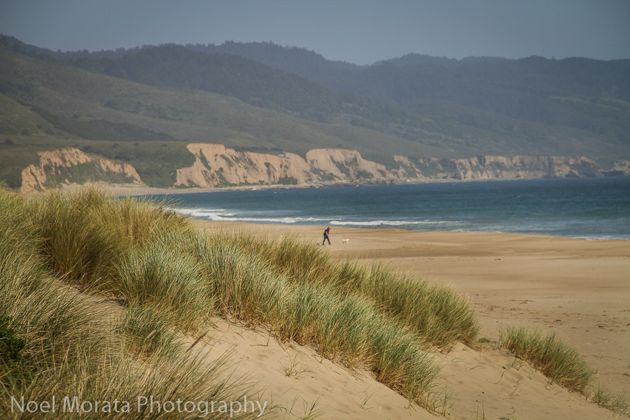 Limantour Beach and the sandy beaches of Drakes bay