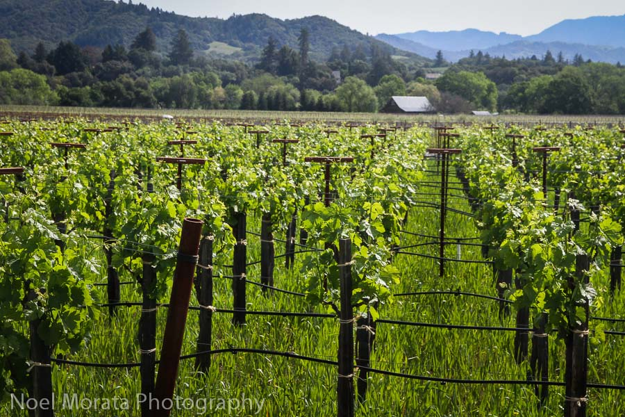 Dry Creek Valley Sonoma road trip