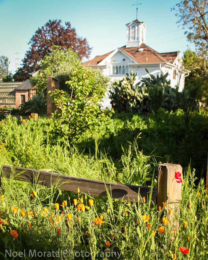 Luther Burbank Gardens and home