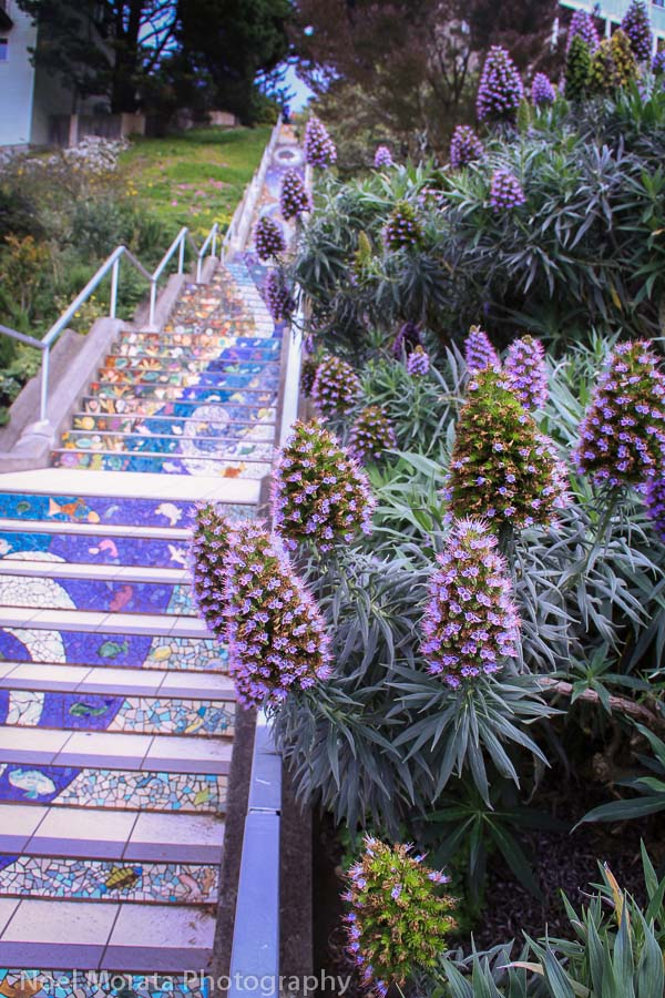 Cool places to visit in San Francisco including the 16th Avenue stairs