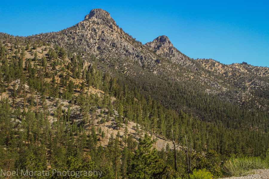 Bristle cone peaks at Spring Mountain National Park