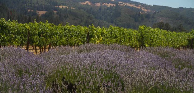 St. Francis Winery in Sonoma - a food and wine experience