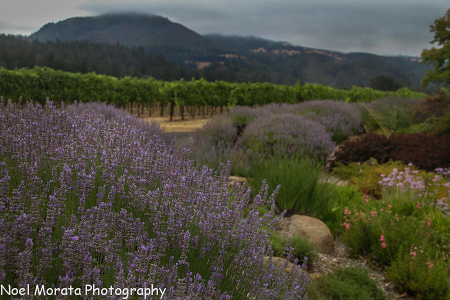 Flower gardens at St. Francis winery