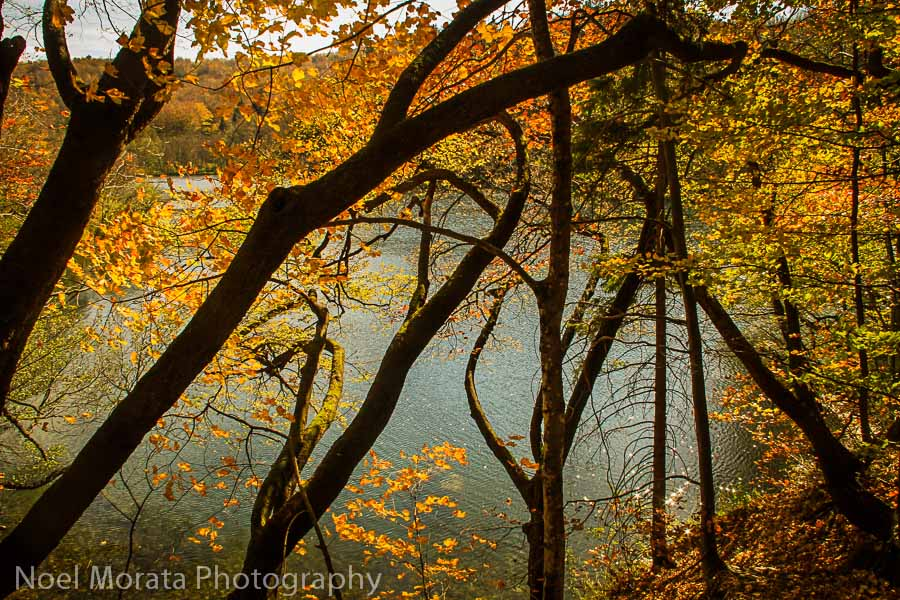 Tree silhouettes and fall colors at Plitvice