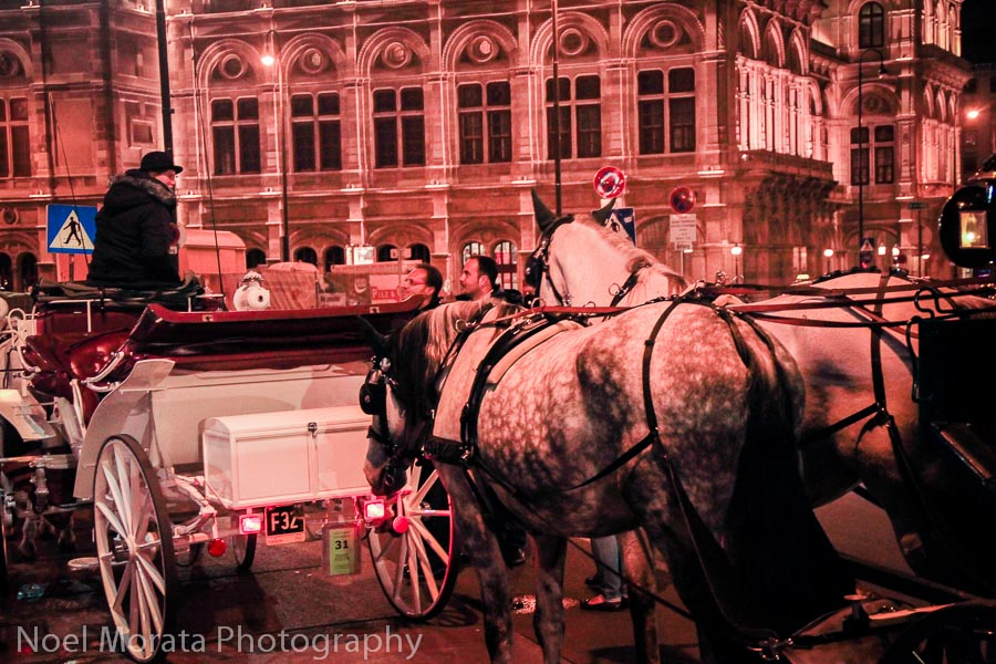 Carriage horse rides along the ring in Vienna