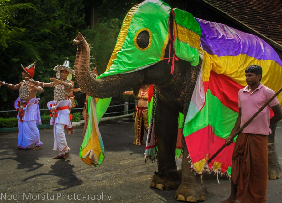 Traditional dances and a colorful elephant in Habanara