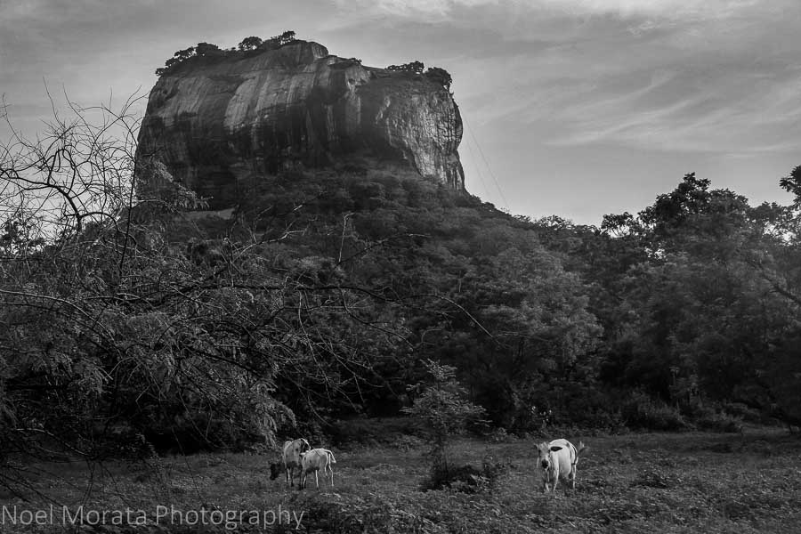 The fortress and palace at Sigiriya
