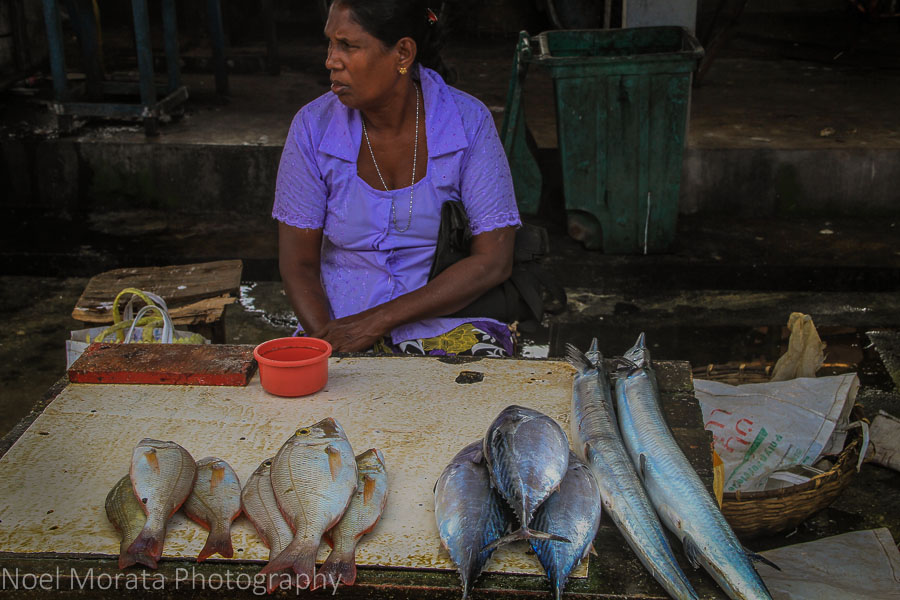 Colorful vendor at the Negombo fish market