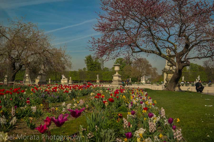 Spring blooms at the Tuileries garden