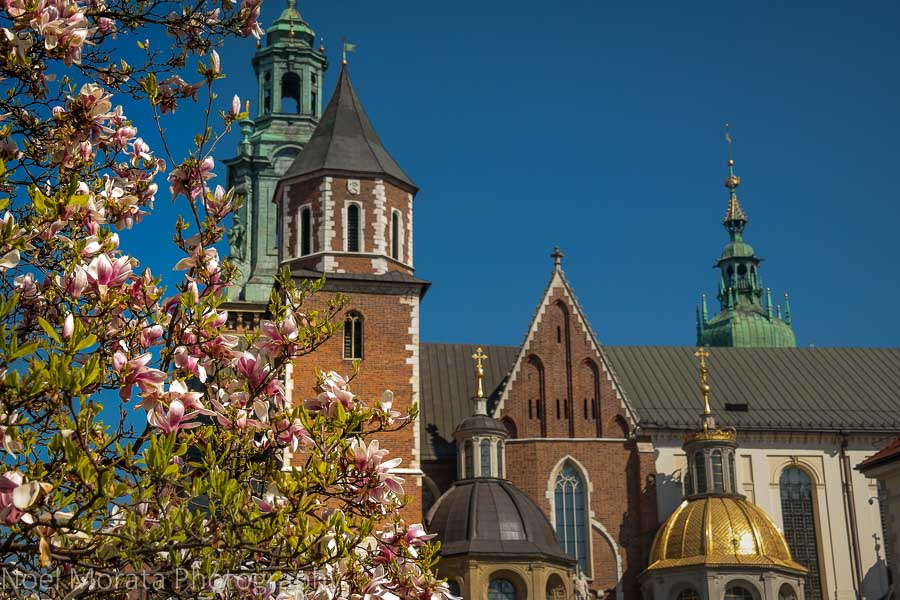 Krakow Cathedral in the central district