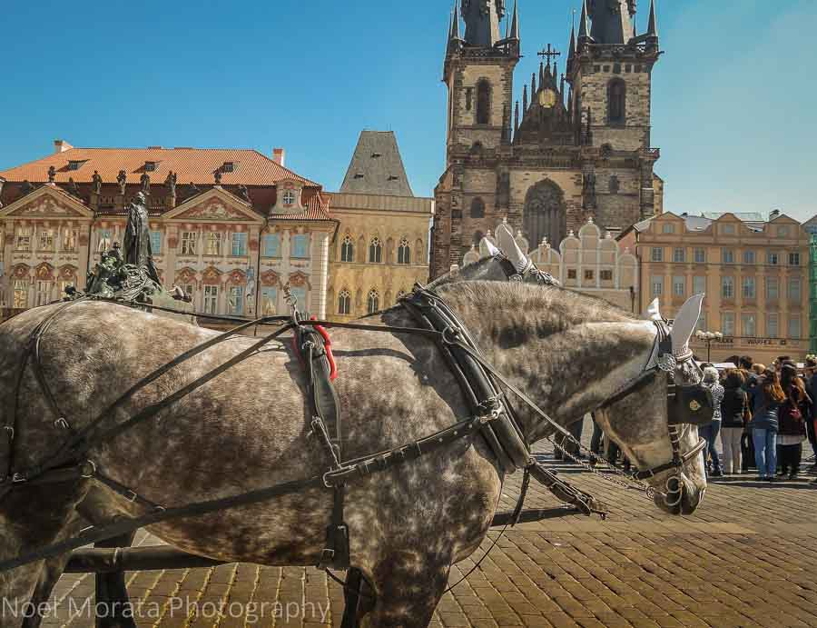 Carriage rides waiting in Prague's main square