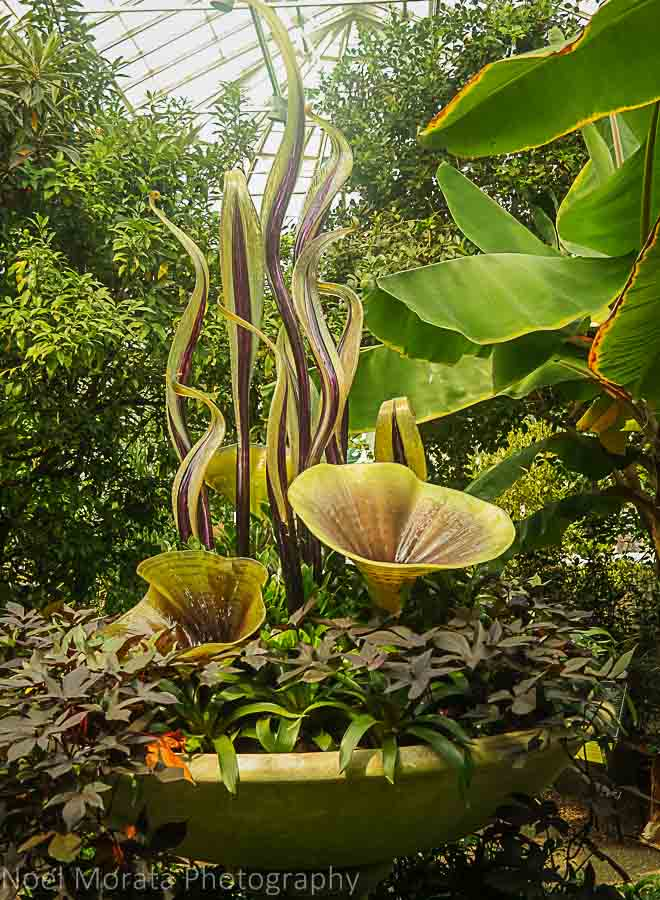 A Chihuly display - Phipps conservatory tour