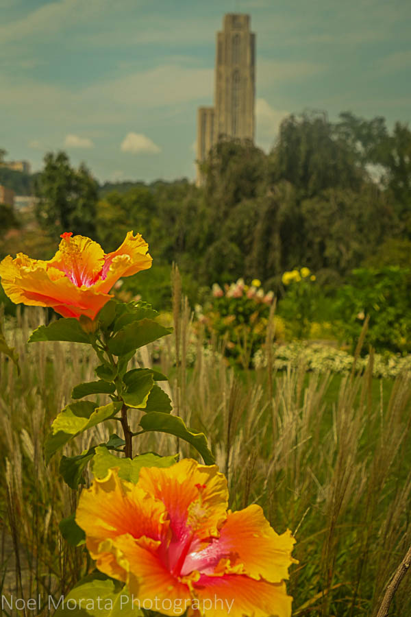 Phipps conservatory and the Cathedral of Learning, Pittsburgh