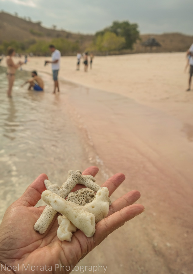 Close up details of the pink sand beach - Visiting Komodo National Park