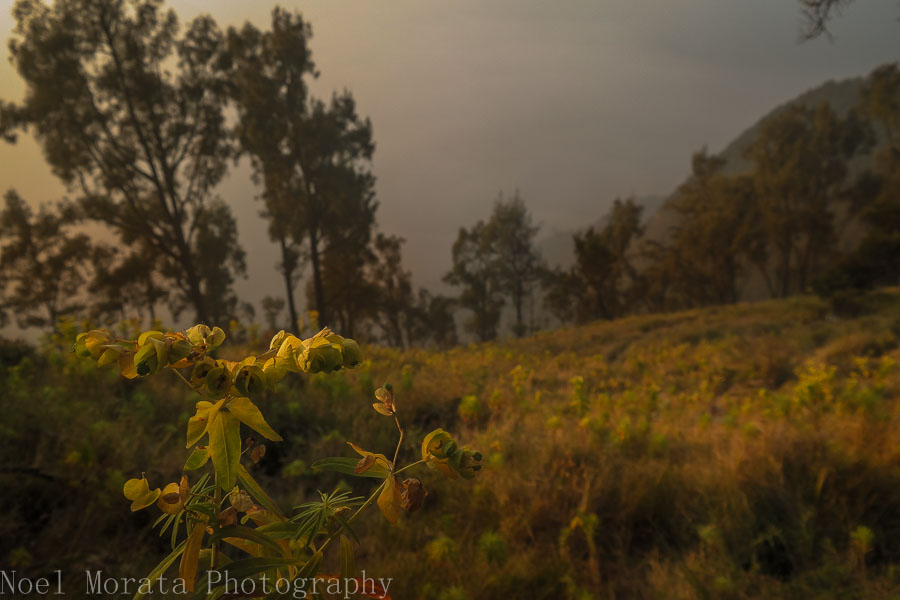 Beautiful botany at Mt. Bromo lookout point