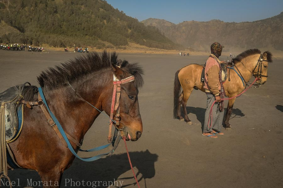 Hired guides and horses - Visiting Mt. Bromo, Indonesia