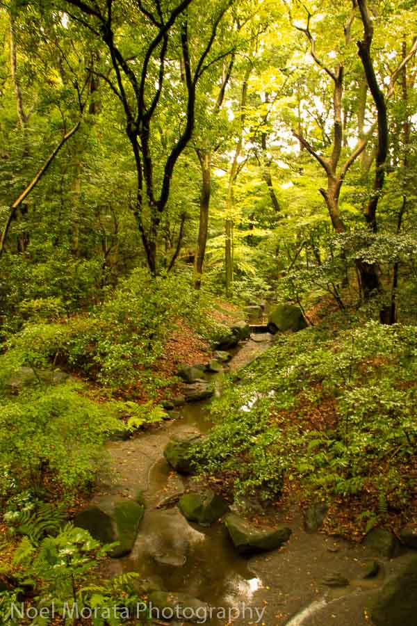 Forest areas of Yoyogi park in Tokyo - Best places to photograph Tokyo Japan