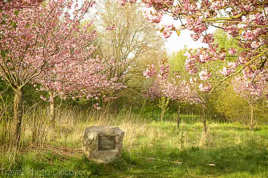 Cherry Blossom placard on the outskirts of Berlin Germany