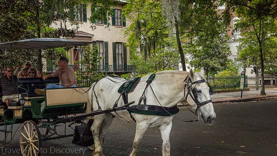 Carriage rides on the Squares of Savannah Visit Savannah in 48 hours