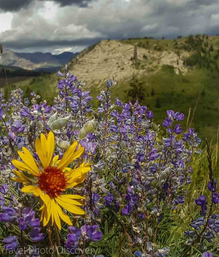 Wildflowers and visit to Glacier National park in Montana