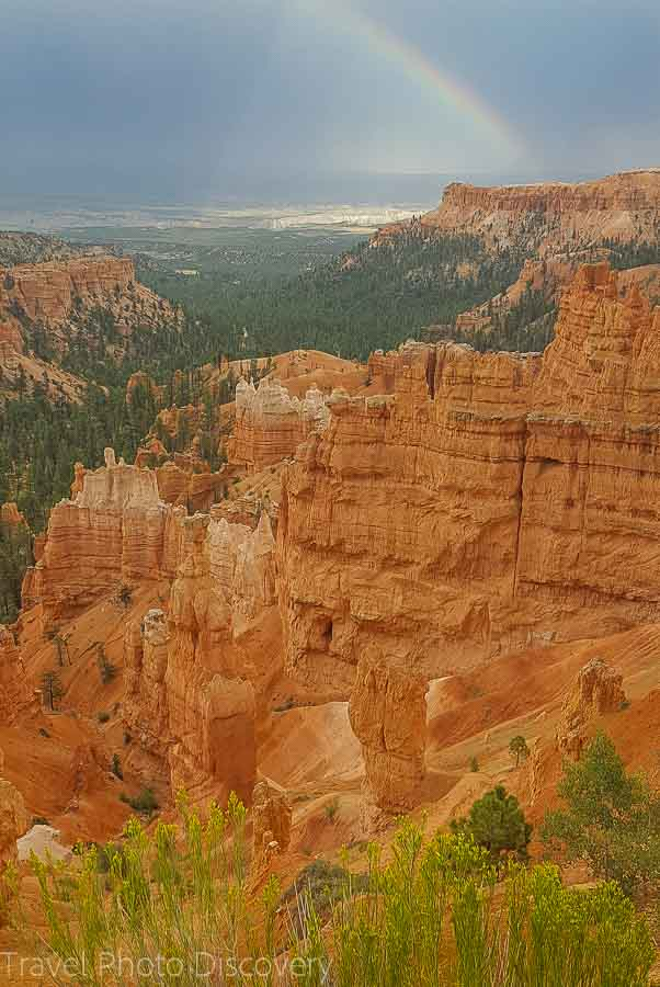 Wild flowers in bloom Visiting Bryce Canyon National Park