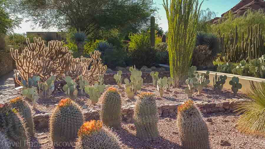 Desert Botanical Garden Weekend getaway to Phoenix Arizona