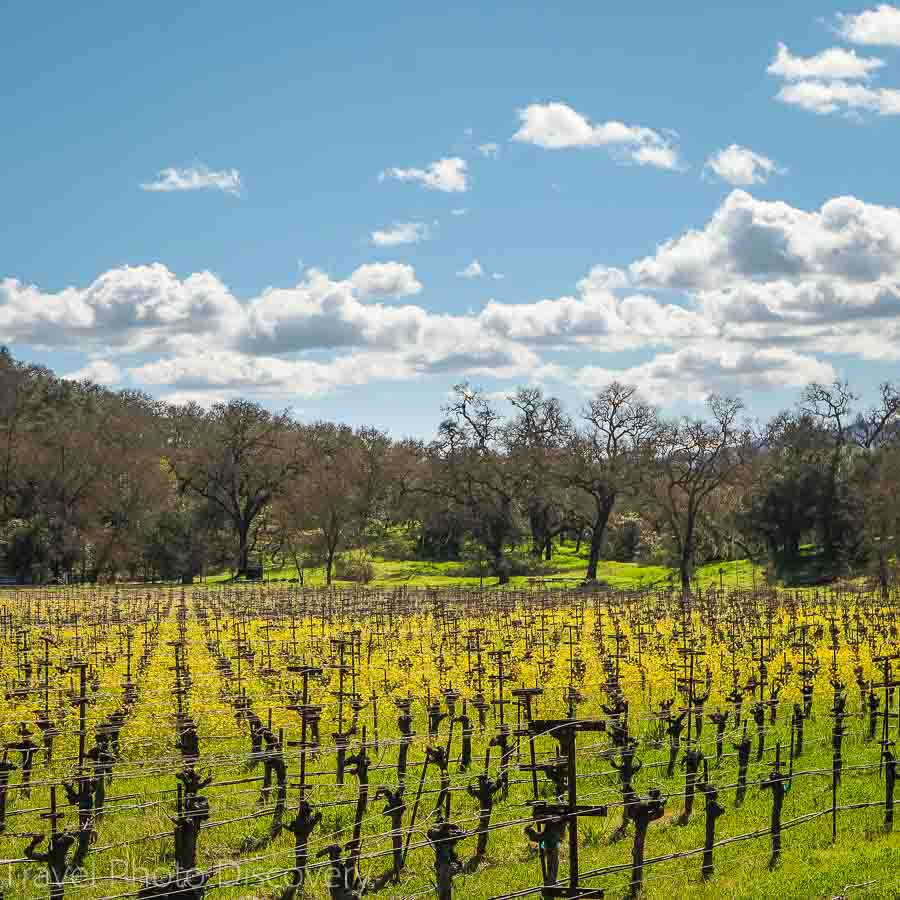 Vineyards along the Silverado trail in Napa Valley