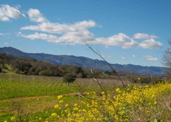 Napa Valley vacation getaway