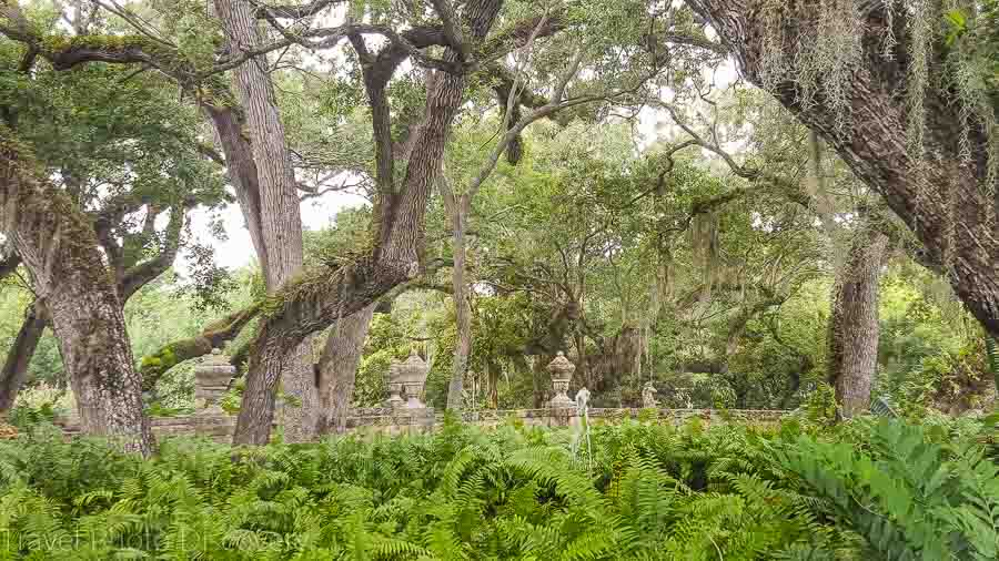 subtropical forests at Vizcaya Museum & gardens