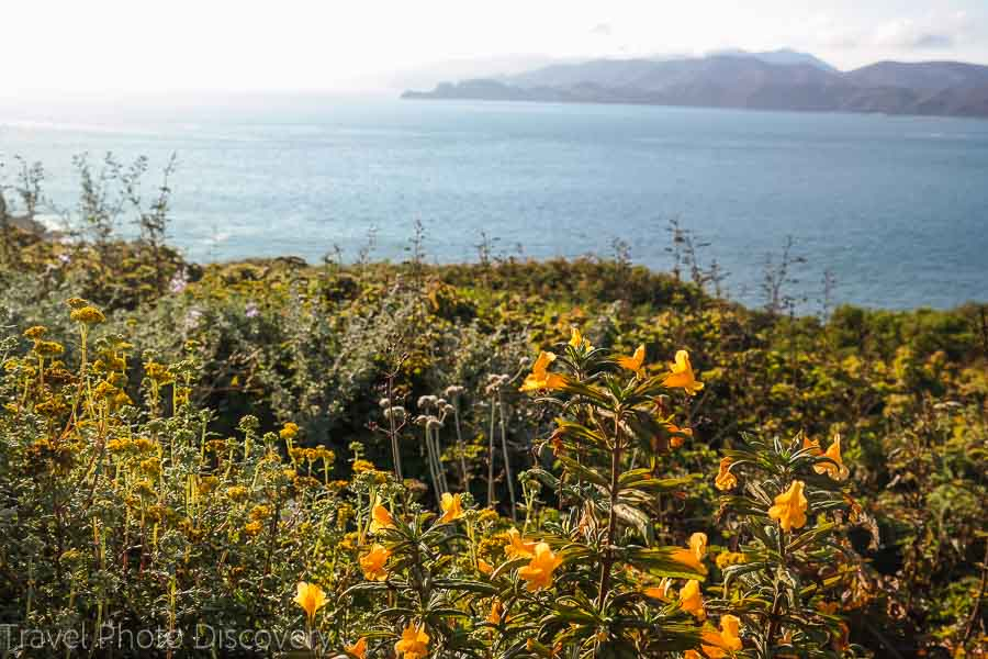 Wildflower blooms at the Golden Gate Recreation park