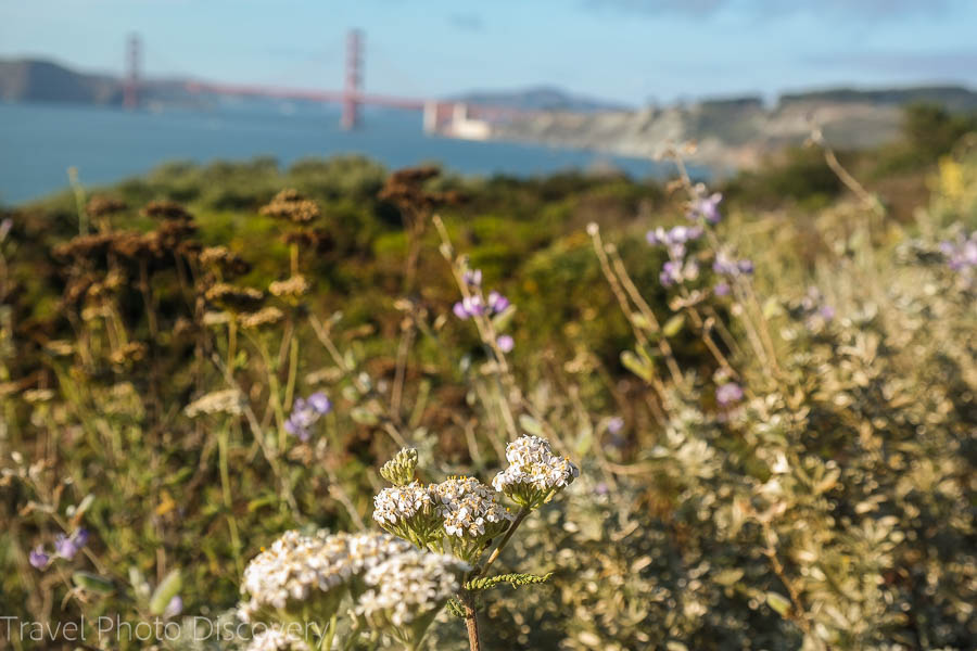 San Francisco coastal walk in spring