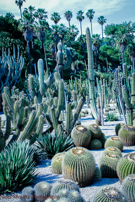 Montjuic parks and botanic gardens in Barcelona
